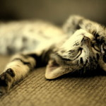Почему кошка во сне дергается?