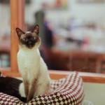 Погладь кота: где в Украине найти котокафе