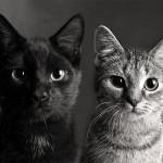 Две кошки в доме. Как их подружить?