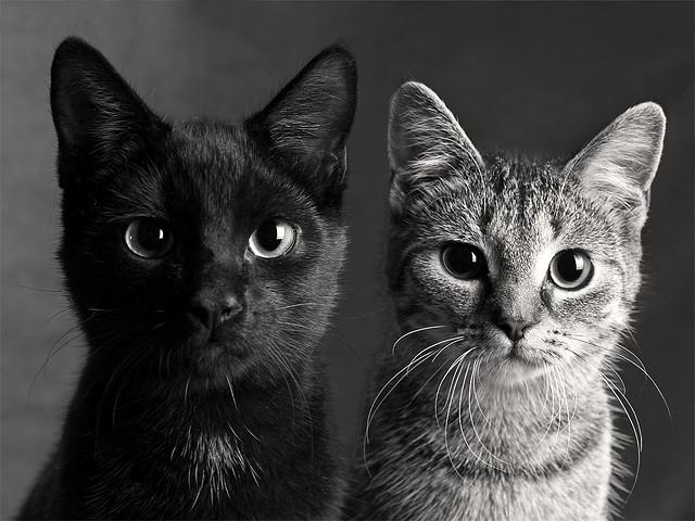 фото кошки две