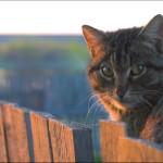 10 мифов о котах