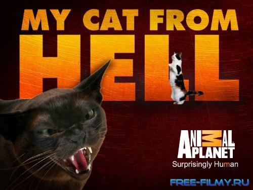 Смотреть адский кот