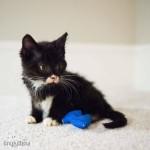 В США котенку напечатали инвалидную коляску на 3D-принтере