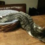 15 фотографий, доказывающих, что коты — это жидкость