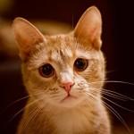 Как попросить прощения у кошки