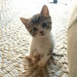Кошки и котята из зоны АТО ищут теплый дом.