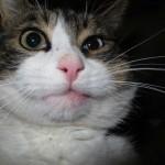 Что делать, если кошку укусила оса и фото котиков которых уже покусали осы