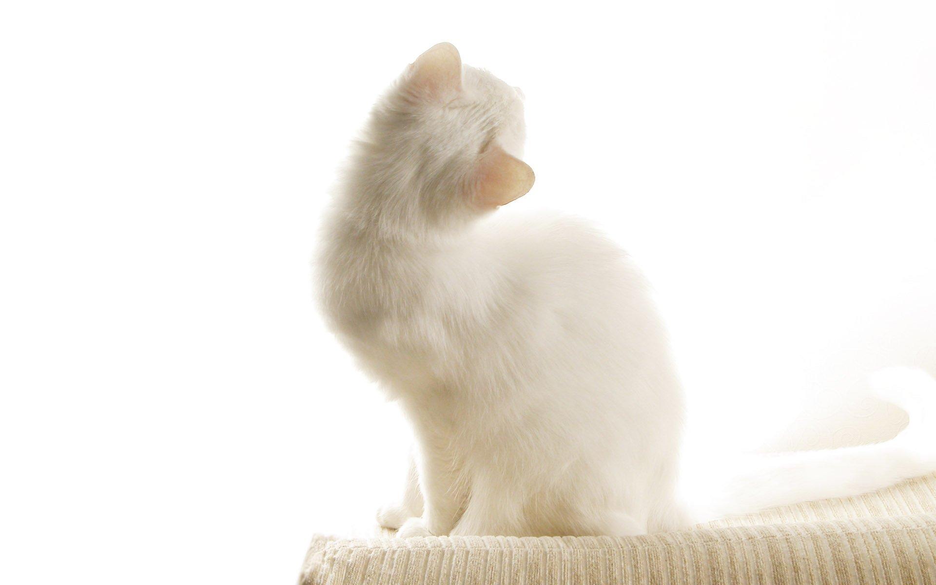 Как отвадить кота от дверей