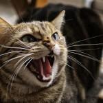 Учёные изучили паразита, которым кошки заражают людей. Обещают выпустить вакцину