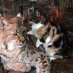 Кот навестил своего сородича за решёткой