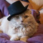 Забавные коты и кошки в прикольных шляпках (42 фото)