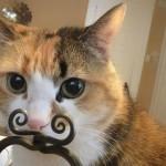 20 замурррчательных котов, сфотографированных в самый подходящий момент