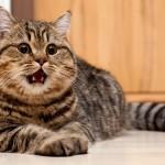 Десять вещей, которые каждый кошатник должен сделать со своим котом (с)