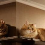 Сколько лет живут кошки и коты?