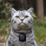 Камера для котов от WHISKAS разбудит в Вашем коте фотографа
