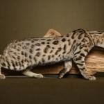 Породы самых больших домашних котов в мире