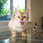 50 оттенков котиков: 21 снимок, который доказывает, что коты умеют выражать эмоции не хуже людей.