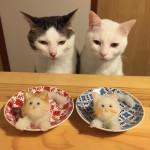 Коты-гурманы