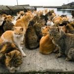 Не наступите на кота! Остров в Японии переполнен пушистиками!
