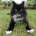 Тайная жизнь кошек / The Secret Life of the Cat