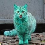 Болгарский бирюзовый кот (12 фото)