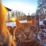 Кот сделал «семейное» селфи. (7 фото)