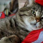 Котик ищет теплый дом и настоящего друга.