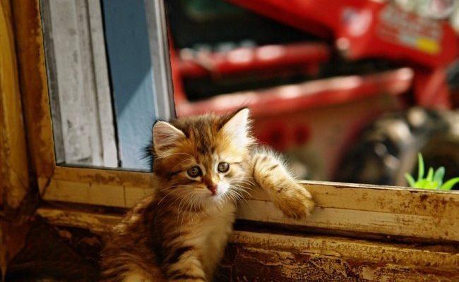Стихи про котов любовь