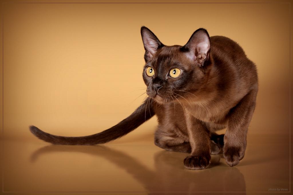опасны ли кошачьи паразиты для человека