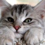 Коты чувствуют плохих людей…