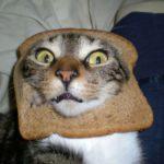 Держитесь за животы! Вас ждут смешные коты!