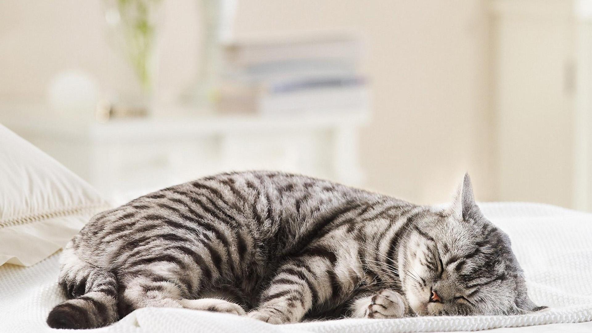 Взрослая кошка начала гадить на кровать. Почему котенок гадит на кровать. Какие могут быть причины того, что питомец гадит на кровать
