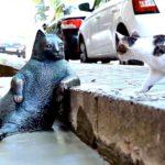 В Стамбуле поставили памятник коту, который любил задумчиво сидеть у бордюра