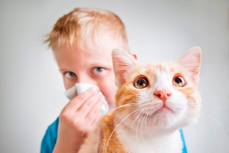 Если у ребенка аллергия на кошку можно ли завести собаку