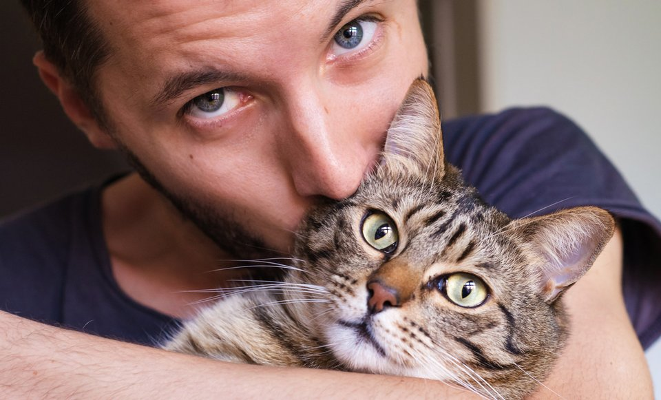 Необычные знакомства котов